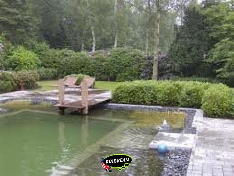 Zwemvijvers tropische vissen discusvissen japanse koi for Zwemvijver benodigdheden