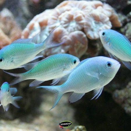 Tropische Vissen & Zeedieren