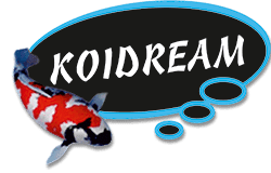 https://www.koidream.com/